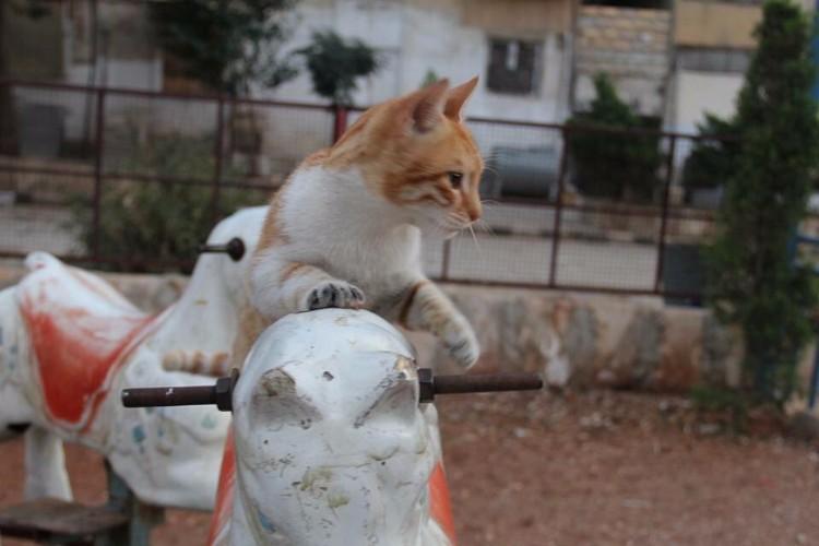 destruyen-alepo-refugio-gatos-16