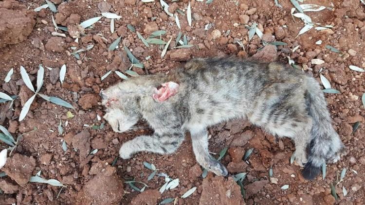 destruyen-alepo-refugio-gatos-18