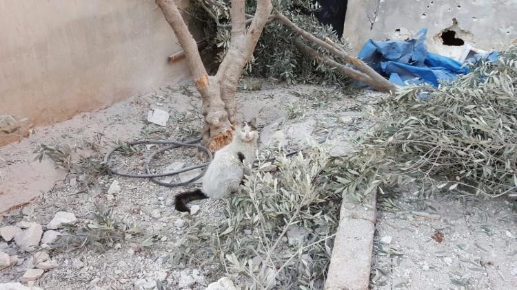 destruyen-alepo-refugio-gatos-21