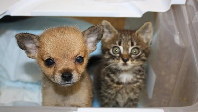 dos-crias-de-perro-y-gato-se-hicieron-amigos-inseparables-despues-de-ser-abandonados-1