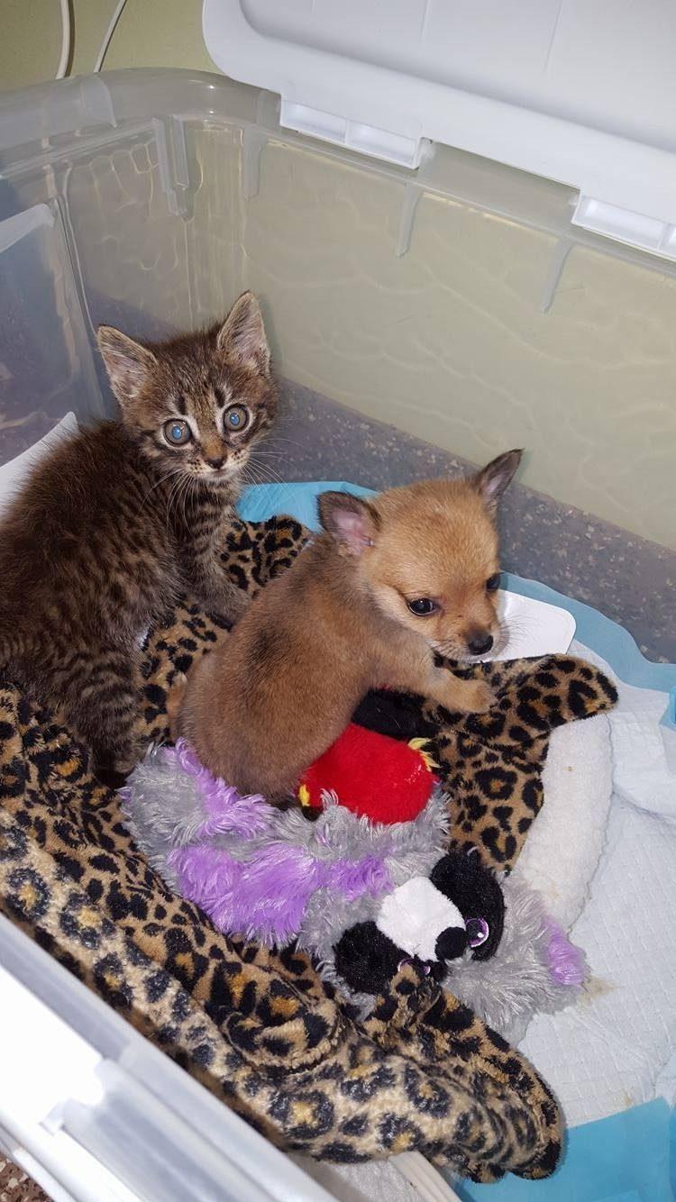 dos-crias-de-perro-y-gato-se-hicieron-amigos-inseparables-despues-de-ser-abandonados-3