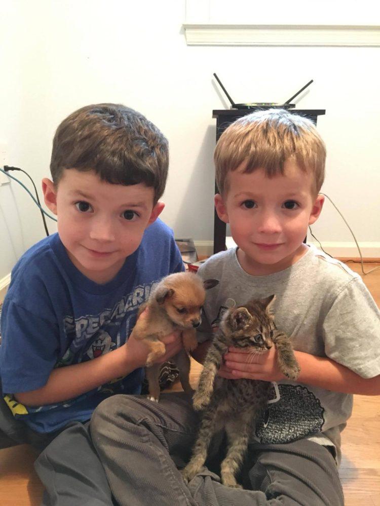 dos-crias-de-perro-y-gato-se-hicieron-amigos-inseparables-despues-de-ser-abandonados-4