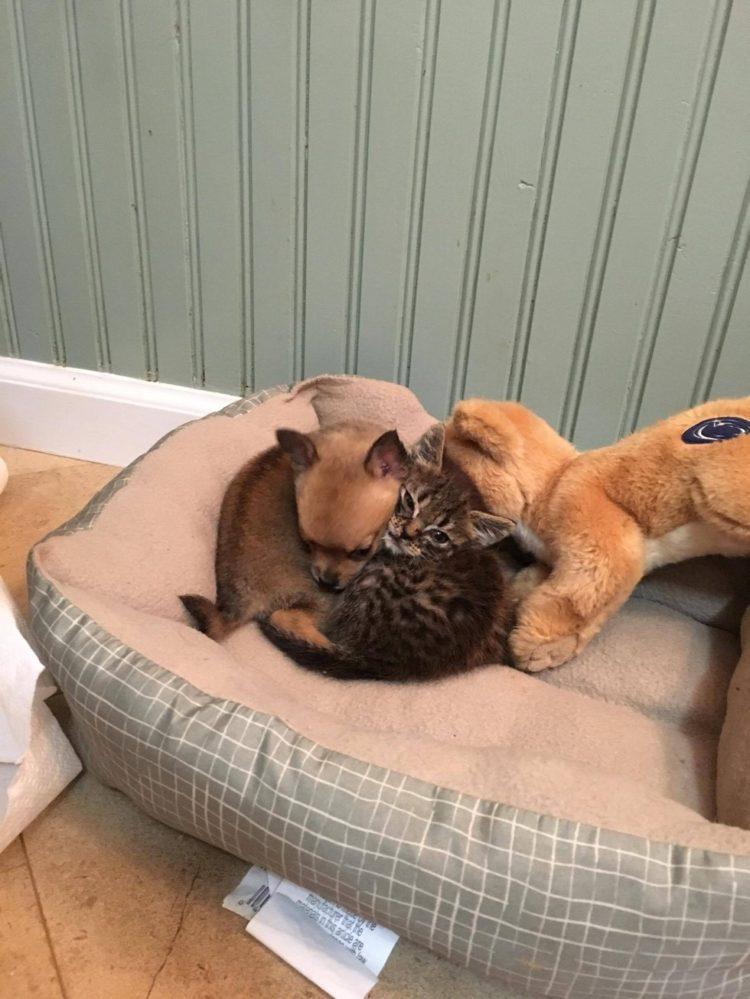 dos-crias-de-perro-y-gato-se-hicieron-amigos-inseparables-despues-de-ser-abandonados-5