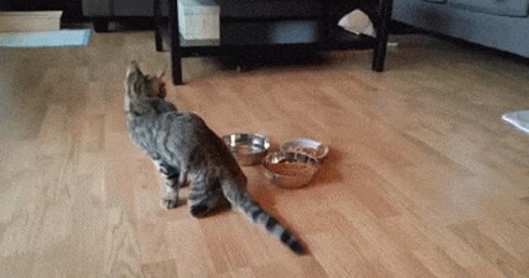 dos-gatos-extraordinarios-rescatados-juntos-1