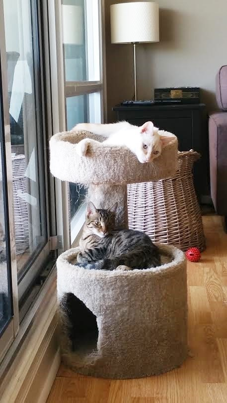dos-gatos-extraordinarios-rescatados-juntos-6