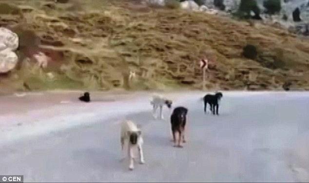 el-valle-de-los-perros-abandonados-1
