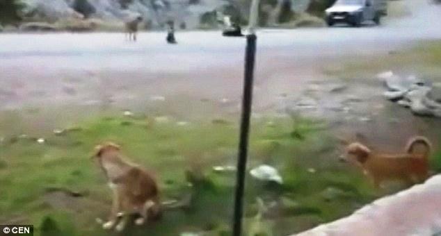 el-valle-de-los-perros-abandonados-2