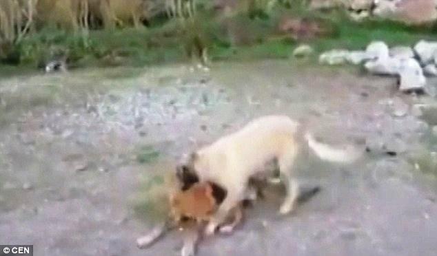 el-valle-de-los-perros-abandonados-6