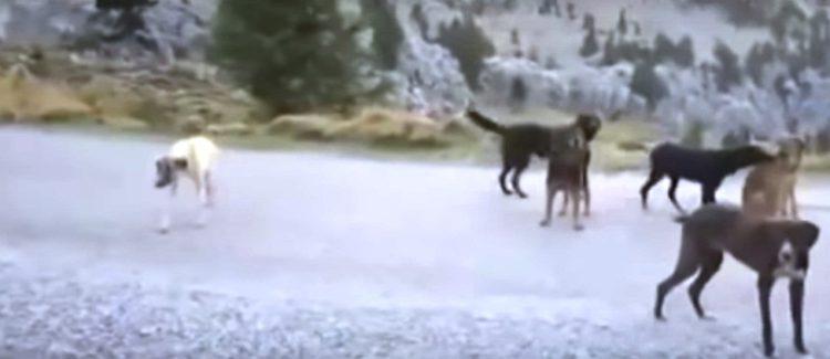 el-valle-de-los-perros-abandonados-8
