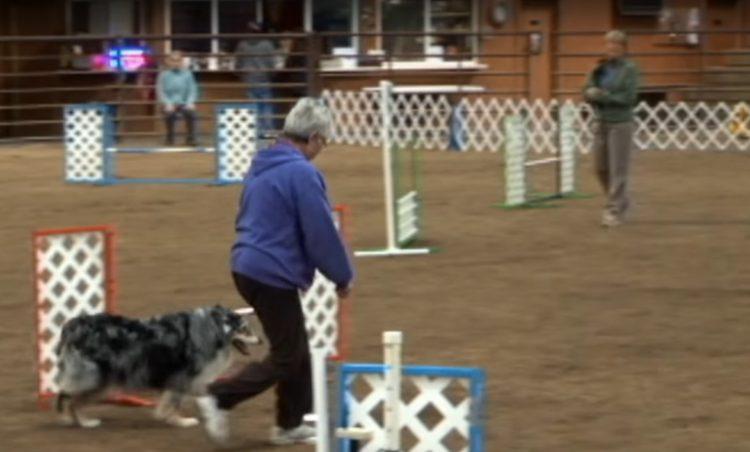 este-perro-mayor-se-despedia-de-la-competencia-1