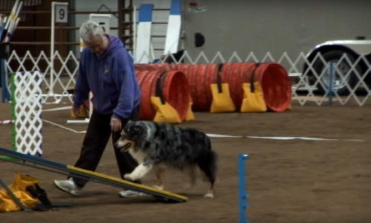 este-perro-mayor-se-despedia-de-la-competencia-2