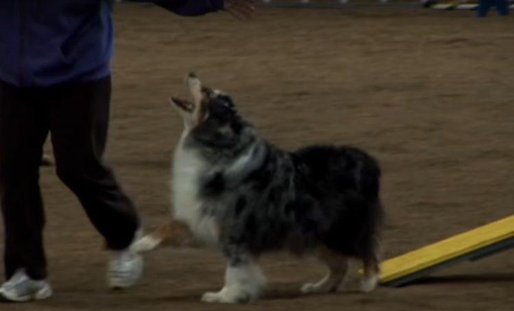 este-perro-mayor-se-despedia-de-la-competencia-3
