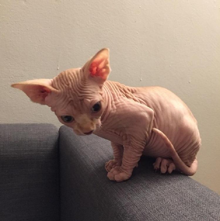 gato-odia-la-caja-de-arena-encuentra-la-mejor-forma-de-ir-al-bano-4