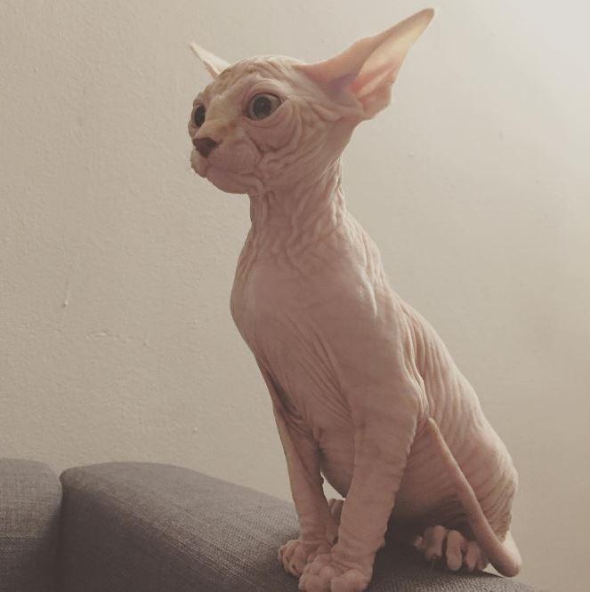 gato-odia-la-caja-de-arena-encuentra-la-mejor-forma-de-ir-al-bano-5