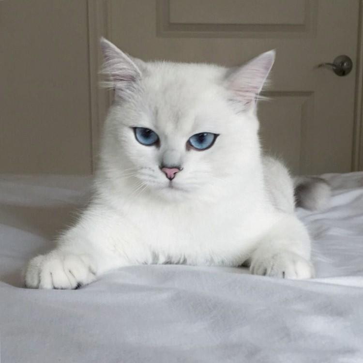 gatos-mas-lindos-del-mundo-01