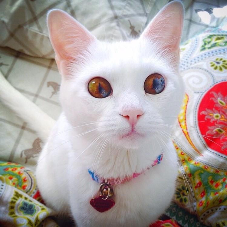 gatos-mas-lindos-del-mundo-02
