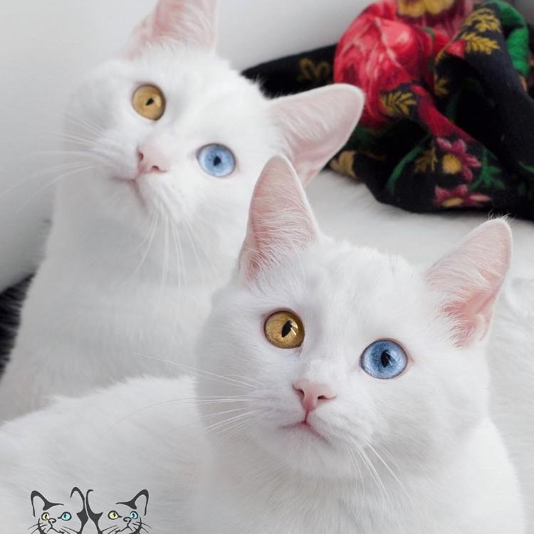 gatos-mas-lindos-del-mundo-03