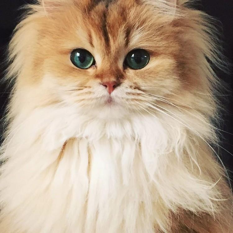 gatos-mas-lindos-del-mundo-04