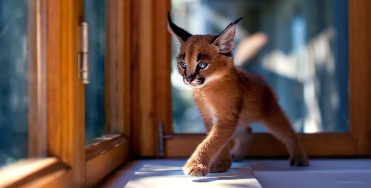 gatos-mas-lindos-del-mundo-05