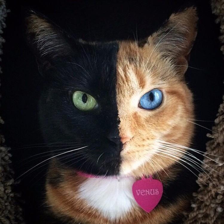 gatos-mas-lindos-del-mundo-07