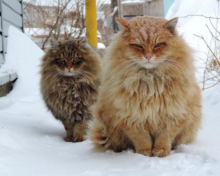 gatos-mas-lindos-del-mundo-08