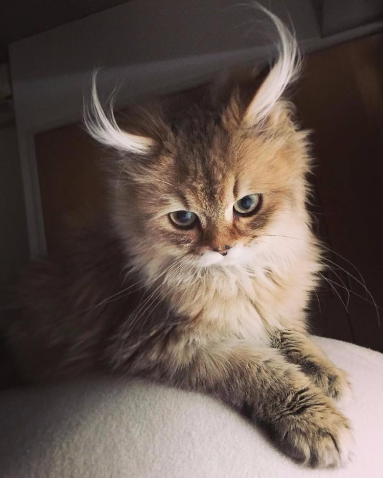 gatos-mas-lindos-del-mundo-09