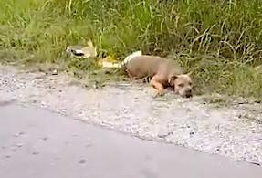 heroe-rescata-perra-herida-que-da-senal-de-vida-levantando-su-cabeza-al-lado-de-carretera-1