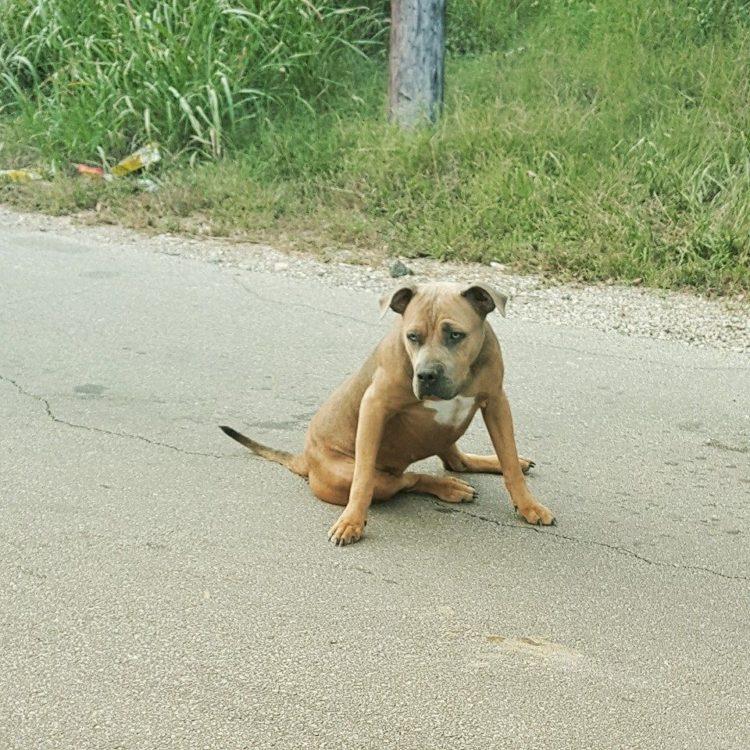 heroe-rescata-perra-herida-que-da-senal-de-vida-levantando-su-cabeza-al-lado-de-carretera-3