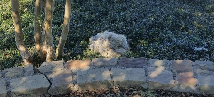 livvy-perra-abandonada-deer-creek-02
