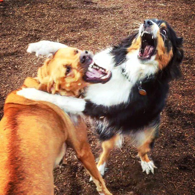 mujer-se-reune-amor-de-su-vida-en-el-perro-park-5