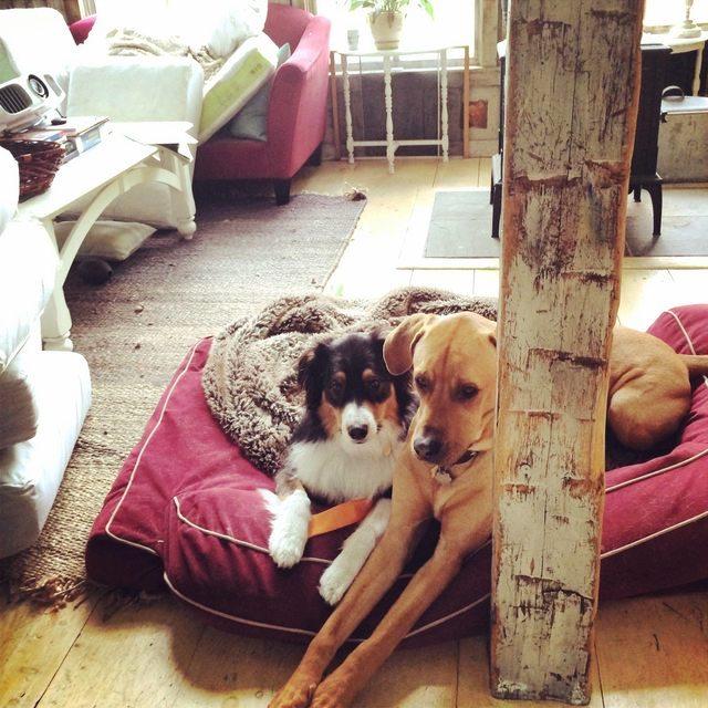 mujer-se-reune-amor-de-su-vida-en-el-perro-park-7