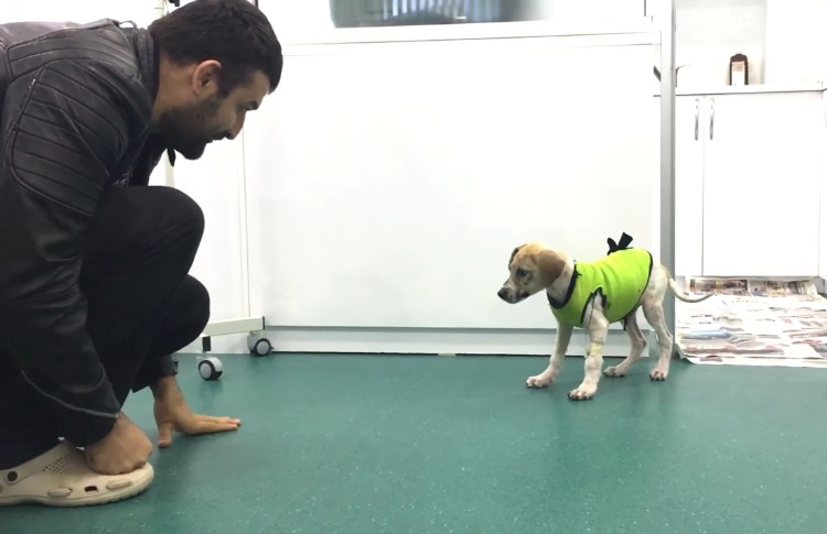 pascal-cachorro-banado-pegamento-04