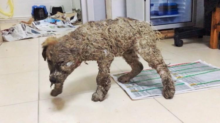 pascal-cachorro-banado-pegamento-09
