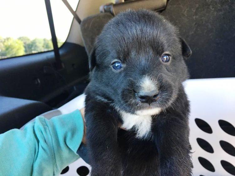 perritos-en-un-cava-6