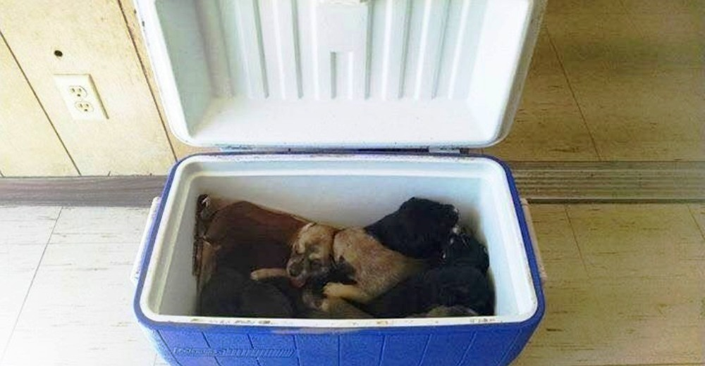 perritos-en-un-cava-portada