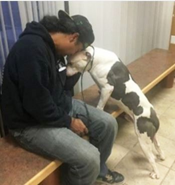 perro-espera-en-curb-mas-de-un-mes-despues-que-su-familia-se-aleja-6