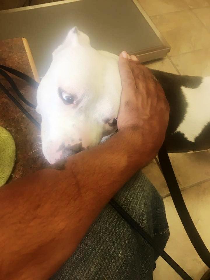 perro-espera-en-curb-mas-de-un-mes-despues-que-su-familia-se-aleja-9