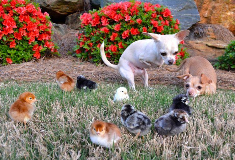 perros-de-la-misma-camdad-le-faltan-dos-patas-a-la-vez-6
