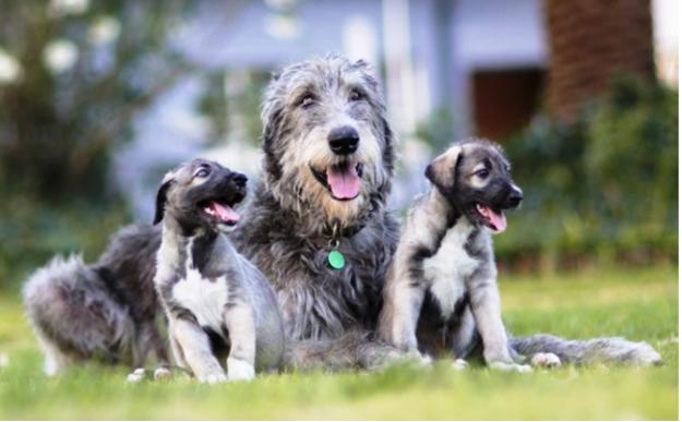 perros-identicos-1