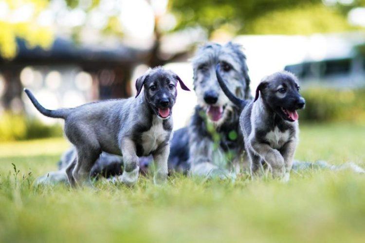perros-identicos-4