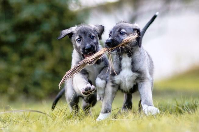 perros-identicos-5