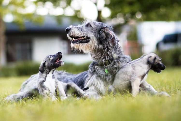 perros-identicos-6