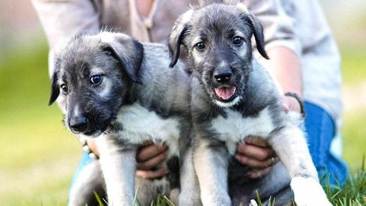 perros-identicos-8