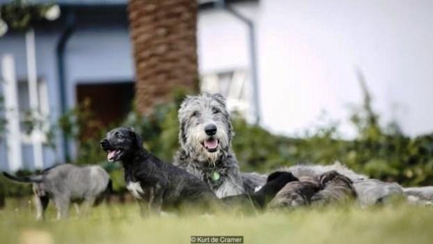 perros-identicos-9