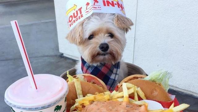 popeye-perrito-callejero-encontro-familia-y-es-famoso-gourmet-1