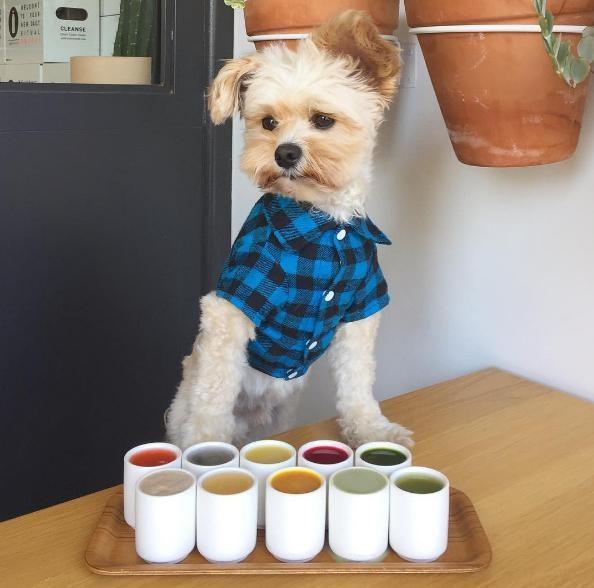 popeye-perrito-callejero-encontro-familia-y-es-famoso-gourmet-11
