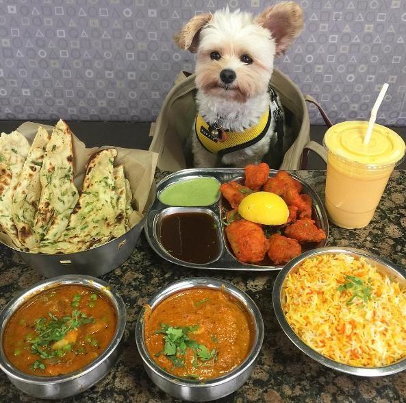 popeye-perrito-callejero-encontro-familia-y-es-famoso-gourmet-13