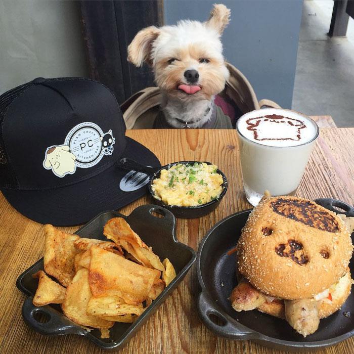 popeye-perrito-callejero-encontro-familia-y-es-famoso-gourmet-15-a