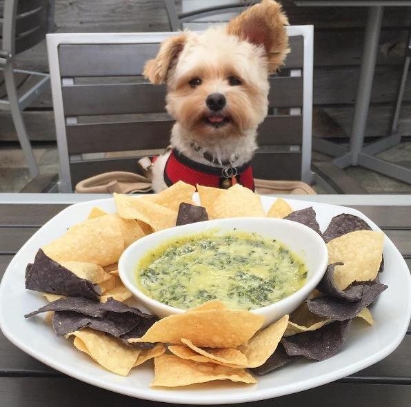 popeye-perrito-callejero-encontro-familia-y-es-famoso-gourmet-16
