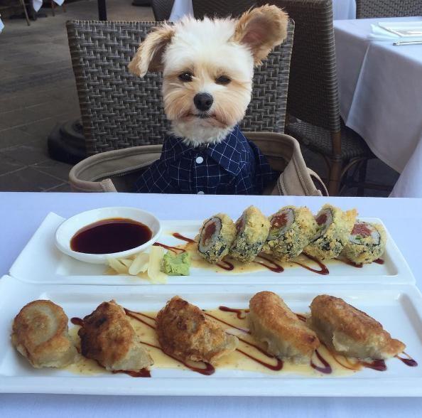 popeye-perrito-callejero-encontro-familia-y-es-famoso-gourmet-17